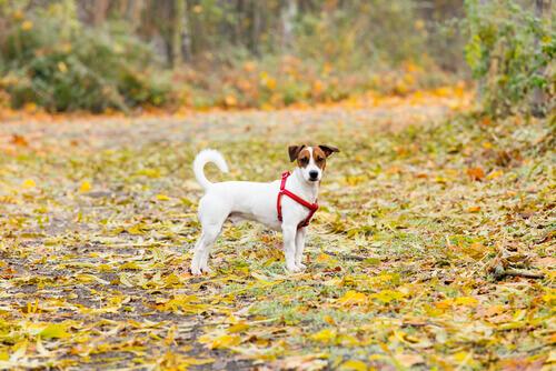 I furti di cani nei parchi aumentano in tutta la Spagna
