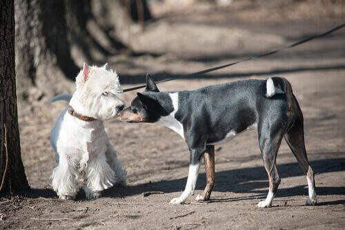 4 cose di cui i cani hanno molta paura