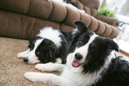 Come alleviare l'ansia da separazione del vostro cane