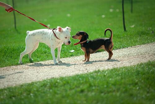 Perché i cani si annusano?