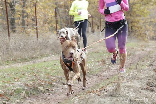 Canicross, il nuovo sport da fare insieme al vostro cane