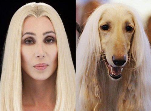 I cani assomigliano ai loro padroni