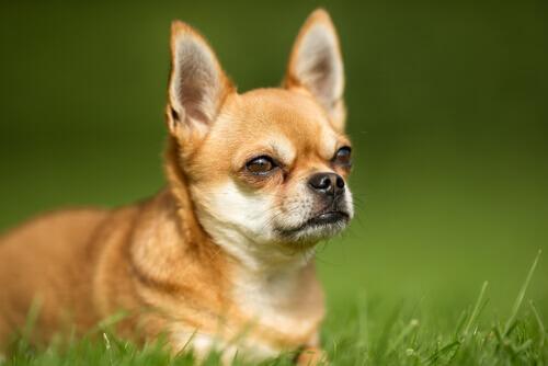 Cosa provoca la flatulenza nei cani?