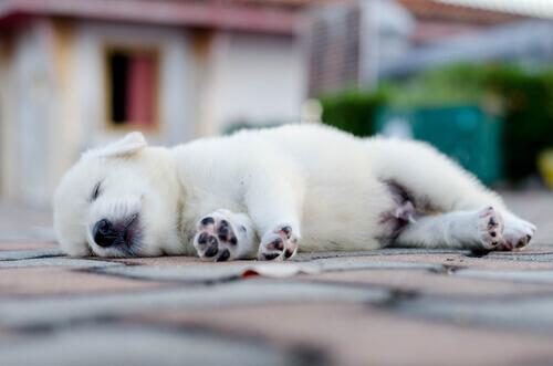 Come dorme il vostro cane?
