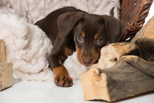 Come aiutare il vostro cane a superare la perdita di un altro animale
