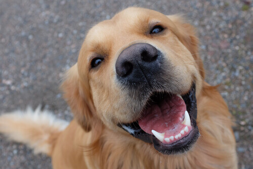 L'importanza dei denti per i cani
