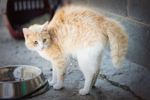 5 cause di fobia nei gatti
