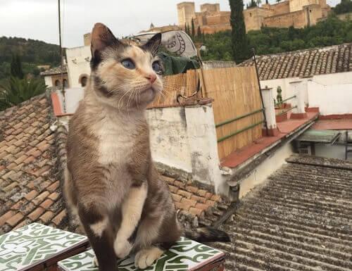 I gatti dell'Alhambra
