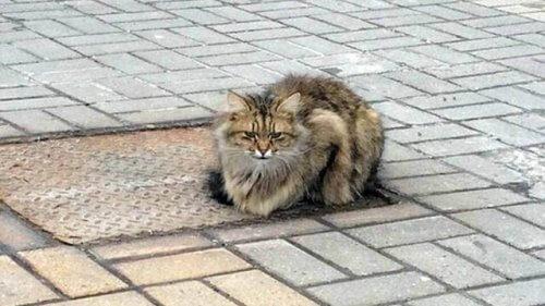 Un micio abbandonato passa un anno ad aspettare i suoi padroni