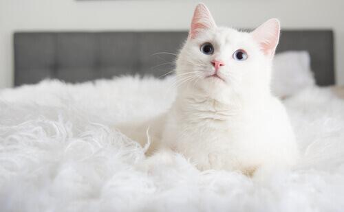 3 cose che si imparano quando si adotta un gatto