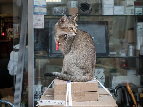 Hong Kong, la città che ama i gatti