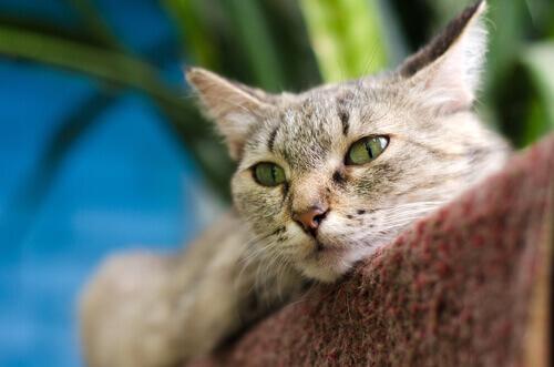 I gatti possono curarsi con le fusa