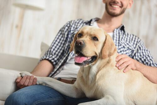 Sapevate che i cani riconoscono il tono di voce?