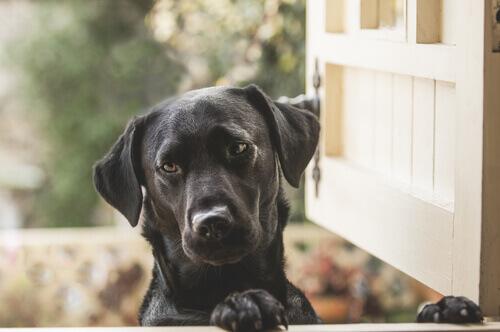 Perché i cani vedono porte invisibili?