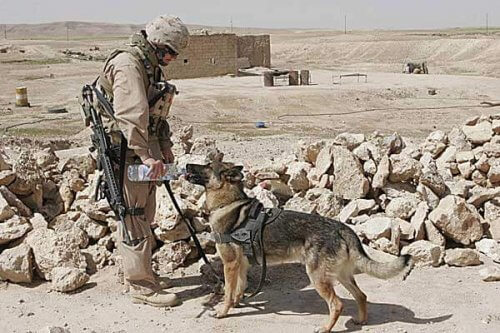 Una tenera storia di amicizia durante la guerra in Afghanistan