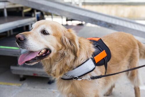 Come stimolare l'intelligenza del vostro cane
