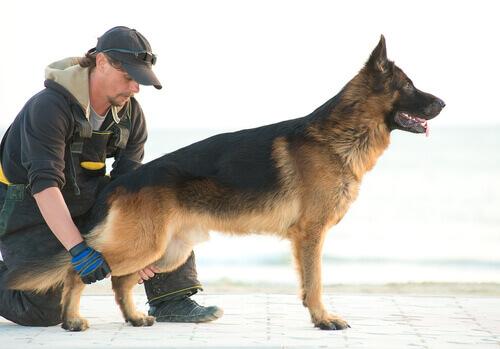 Terapia per detenuti con cani abbandonati