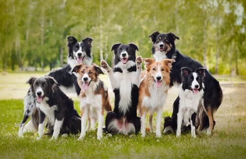 21 cose che non sapevate sui cani (parte 2)