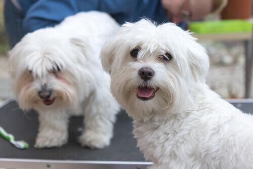3 consigli per avere un cane sano e felice