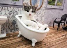 Arriva il primo reality show sui gatti