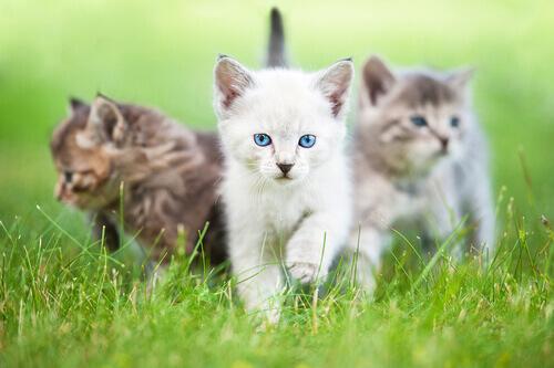 età dei gatti