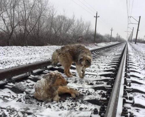 Cani che salvano altri cani: le storie più commoventi