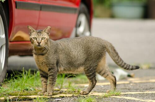 Accogliere un gatto randagio in casa: consigli utili