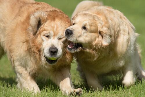 Come evitare che il cane morda senza motivo