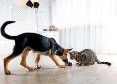 Cosa non fare mai al vostro cane o gatto