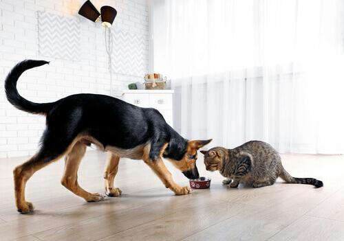 Ecco cosa non fare mai al vostro cane o gatto