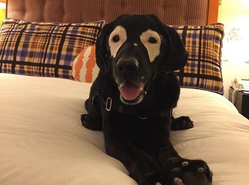 Rowdy, il cane che ha conquistato le reti sociali