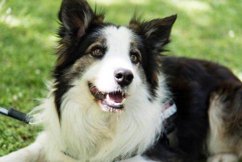 Ecco il cane che scova i veleni nei parchi