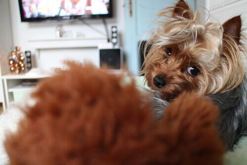 Sapevate che anche i cani guardano la televisione?