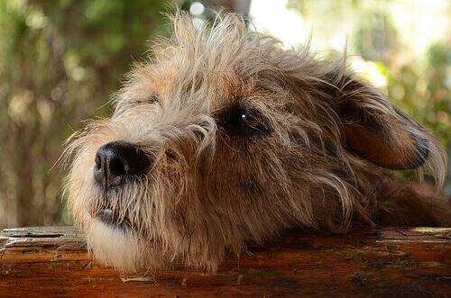 Sensi di colpa: i cani provano rimorso e vergogna?