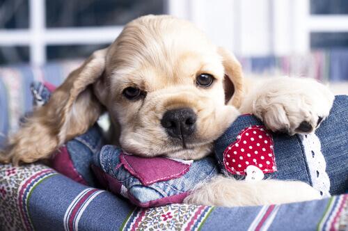 I benefici del miele per il vostro cane
