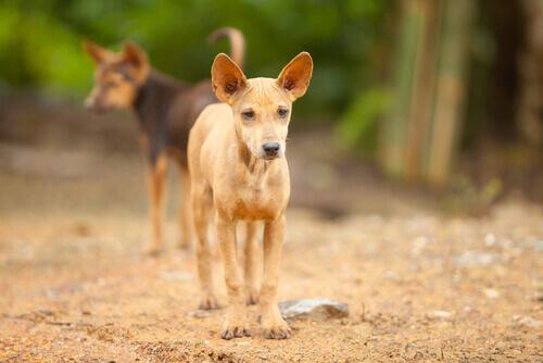 Monumenti ai cani abbandonati: quando l'uomo chiede scusa