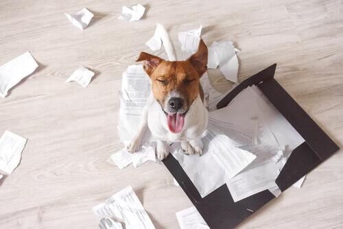 Il cane distrugge la casa quando non ci siete