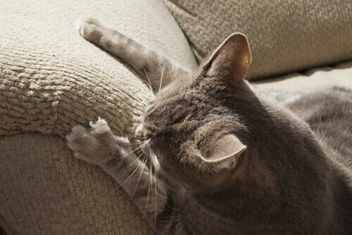 Il vostro gatto graffia i mobili? Ecco come farlo smettere