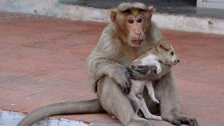 La scimmia che ha adottato un cucciolo di cane