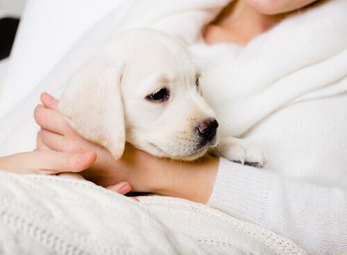 Frasi da non dire mai agli amanti dei cani