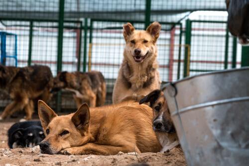 Il Messico rende omaggio ai cani abbandonati