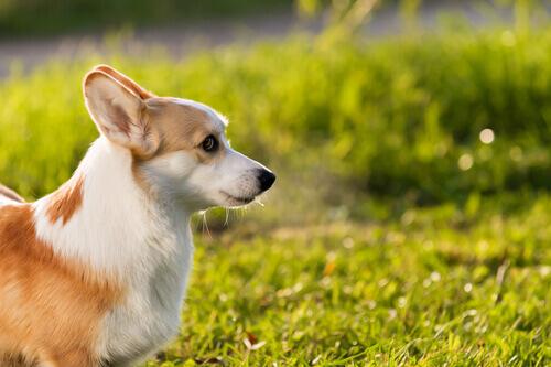 Perché ai cani piace prendere il sole