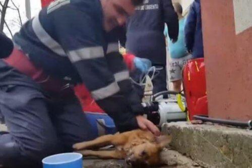 Pompiere salva un cane con la respirazione bocca a bocca