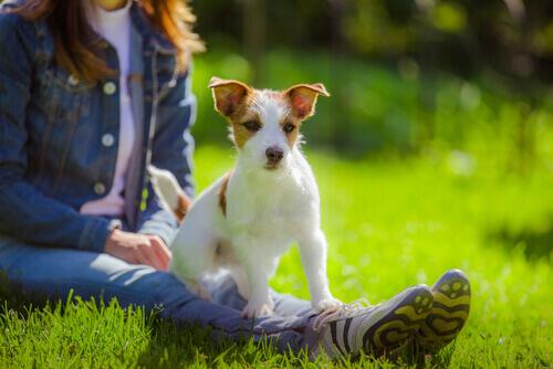 La relazione tra cane e padrone, benefici per entrambi