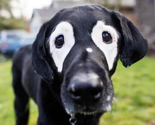 Ecco Rowdy, il cane che ha conquistato le reti sociali