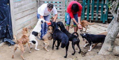 Sfrattano associazione che accoglieva cani maltrattati
