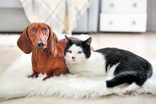 Perché tutti dovrebbero avere un gatto in casa?
