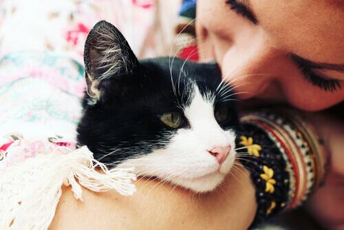 Come capire se un gatto vi vuole bene