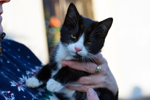 Uno studio rivela come comunicano i gatti