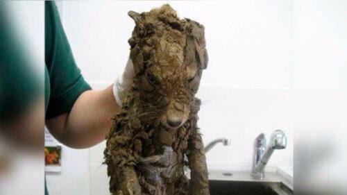 Non sapevano che animale fosse finché non l'hanno lavato